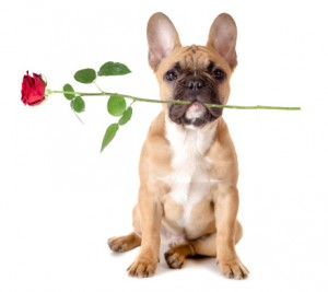 inbound marketing valentine